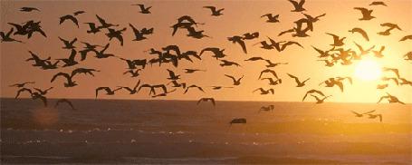Фото Чайки над морем в лучах заходящего солнца