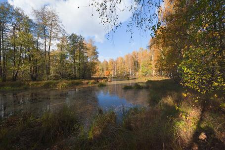Фото Небольшой пруд, расположенный в лесу с деревьями, покрытыми осенней листвой, работа фотографа Валерия Пешкова (© Felikc), добавлено: 13.01.2013 15:10