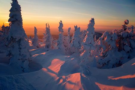 Фото Заснеженные ели с отражающей на глубоком снегу багряной полосой закатного неба, работа фотографа Валерия Пешкова (© Felikc), добавлено: 13.01.2013 15:40