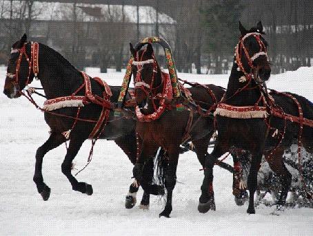 Фото 'Эх, вы, кони, кони мои удалые..- мчатся упряжки с конями, звеня бубенцами по зимней дороге, звеня удилами'