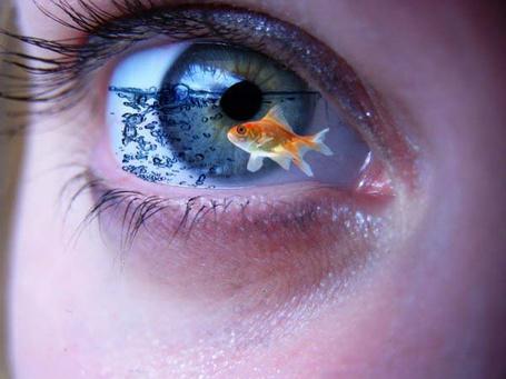 Фото В синем глазе, наполненным водой, плавает рыбка