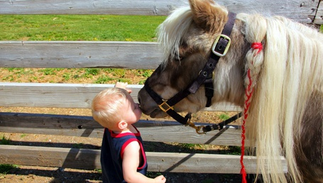 Фото Белобрысый мальчуган целует морду у пони