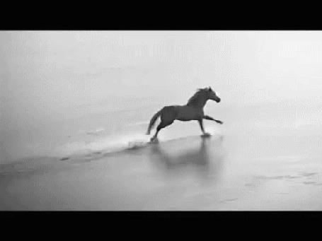 Фото Бегущая по воде лошадь и чайка, летящая за ней