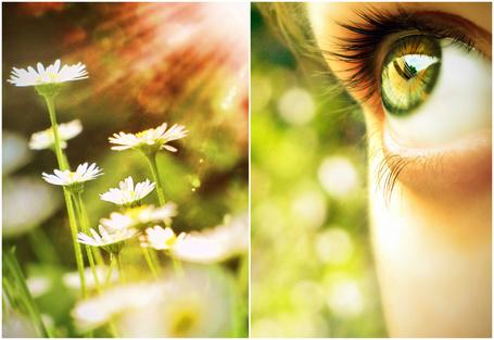 Фото Зеленый глаз и ромашки под солнечными лучами