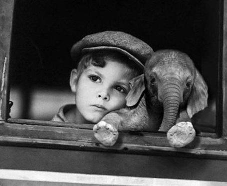 Фото Мальчик с маленьким слонёнком смотрят из окна
