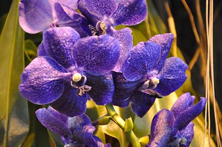 Фото Фиолетовые орхидеи