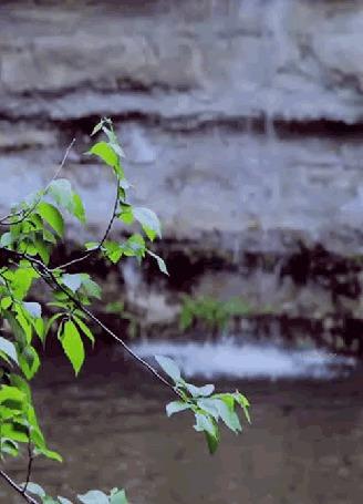 Фото Качающаяся веточка с листочками на фоне льющейся воды из гор