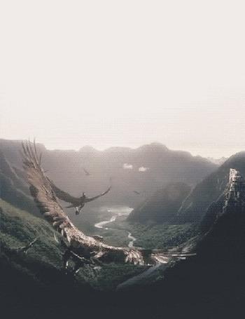 Фото Летящие орлы в горах