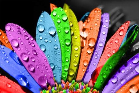 Фото Цветок с разноцветными листочками