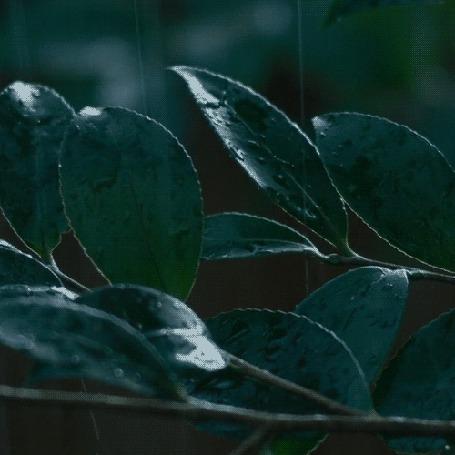 Фото Веточка с зелеными листочками под дождем (© ), добавлено: 25.01.2013 08:38