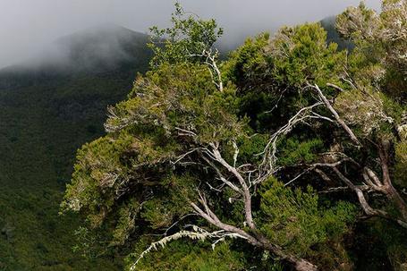 Фото Тропическое дерево с видом на гору (© Banditka), добавлено: 26.01.2013 20:18