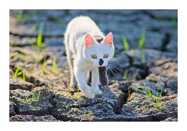 открытие, фото черная кошка с мышкой в зубах наиболее распространенных заболеваний