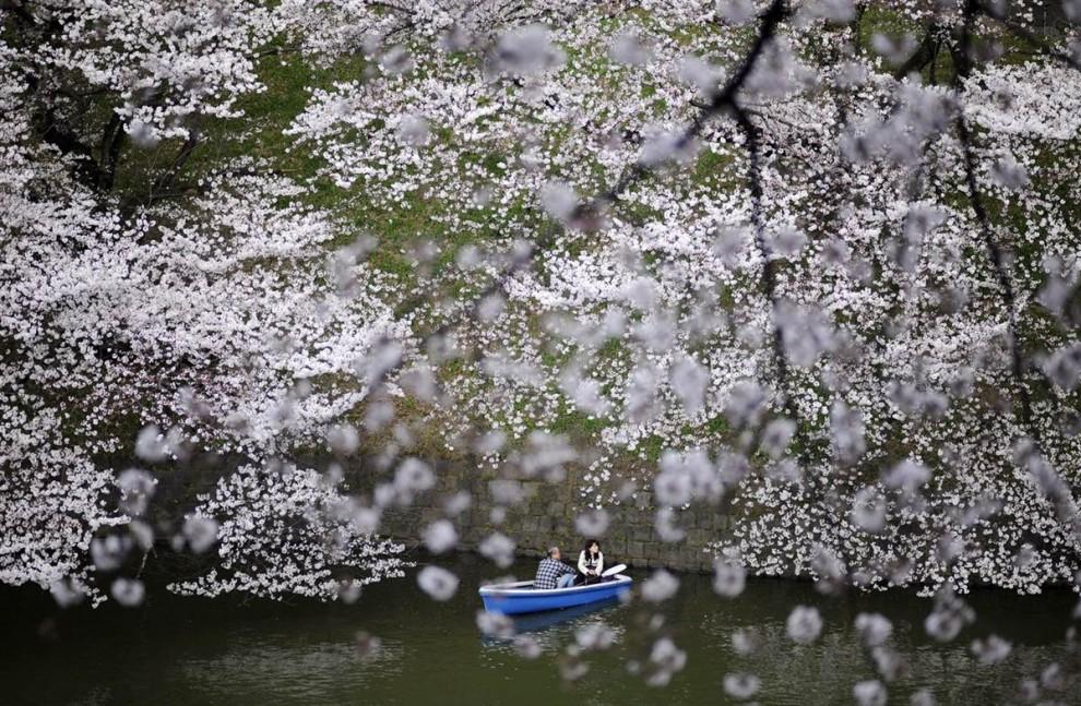 Foto Um homem e uma mulher estão navegando ao longo de um canal entre as cerejeiras em flor perto do Palácio Imperial, Tóquio, Japão / palácio imperial, Tóquio, Japão, trabalho do fotógrafo Franck Robichon