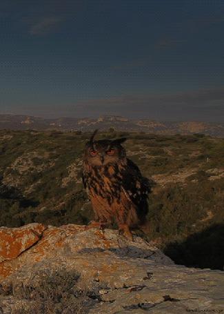 Фото Филин сидит на краю скалы