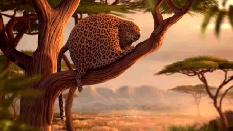 Фото Толстый леопард зевает и падает с ветки из видеоролика 'Rollin' Safari'