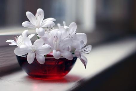 Фото Беленькие цветы в красной вазочке (© ), добавлено: 08.02.2013 18:26