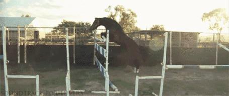Фото Лошадь, преодолевающая барьеры