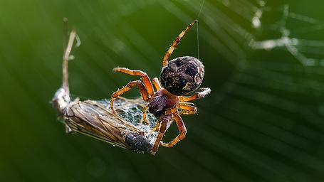 Фото Паук заплел бабочку в свои сети, полуостров Камчатка, работа фотографа Евгения Воевудского (© Felikc), добавлено: 09.02.2013 09:50