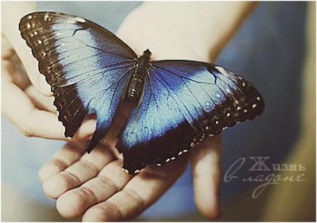 Фото Бабочка в руках человека ('Жизнь в ладоне') (© Anastasiya.), добавлено: 09.02.2013 14:50