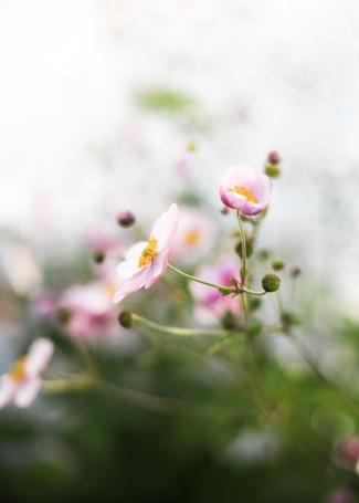 Фото Розовые цветочки (© Black Tide), добавлено: 14.02.2013 02:15