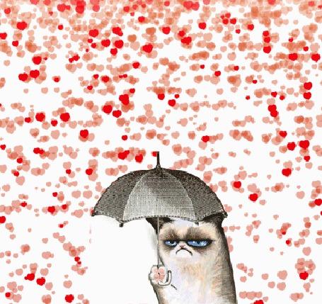 Фото Grampy cat / Грустный кот с зонтиком стоит под дождем из сердечек