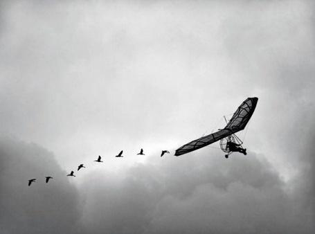 Фото Мужчина летит на дельтаплане, впереди него летит стая птиц
