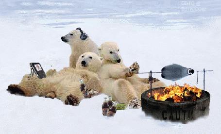Фото Белые медведи устроили пикник: жарят на вертеле пингвина, слушают музыку, пьют виски