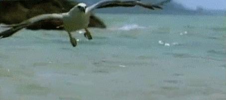 Фото Хищная птица в полете, когтями схватывает змею из моря