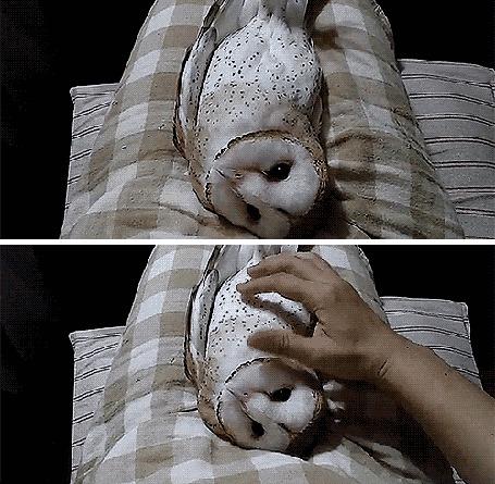 Фото Человеческая рука нежно поглаживает маленького совенка, лежащего на подушках