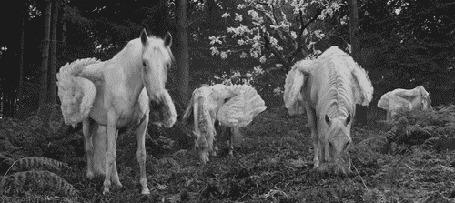 Фото Пегасы стоят на поляне возле леса