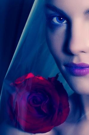 Фото Девушка в прозрачной голубой накидке с розой под цвет ее губ