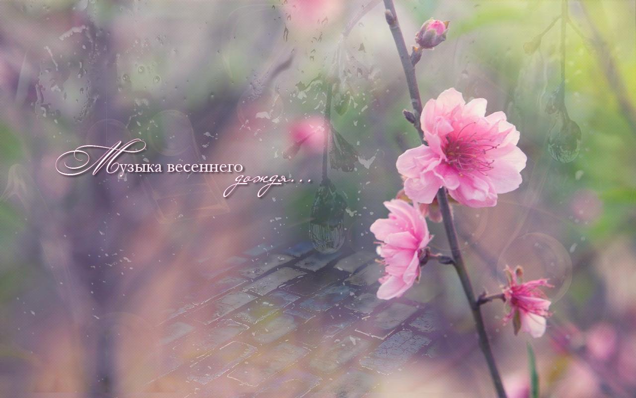 Дождливое утро картинки красивые необычные, для ретро открыток