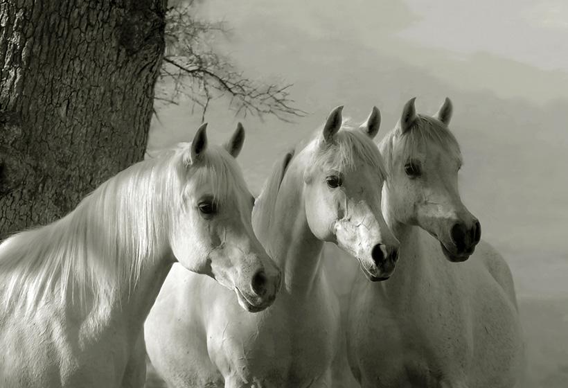 Красивые открытки с лошадями, прикольное днем