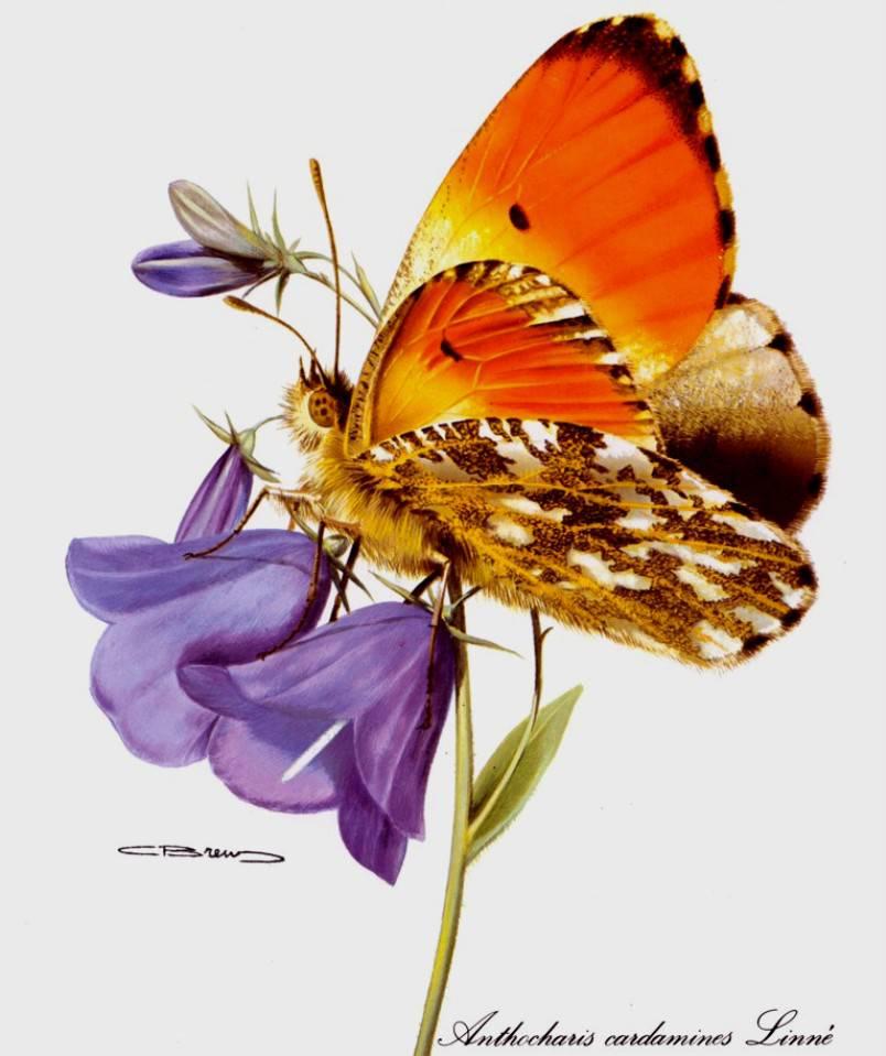Фото бабочка на цветке колокольчика