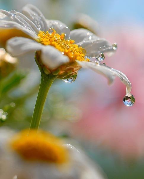 Фото утренней росы на цветах