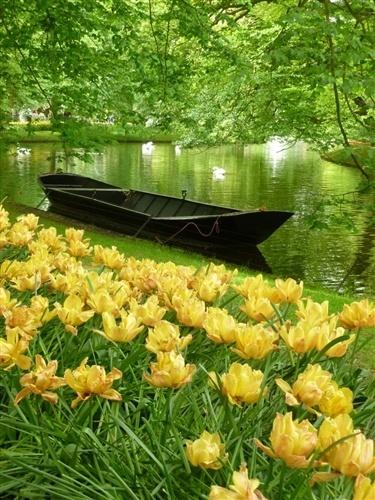 Желтые цветы растут на даче