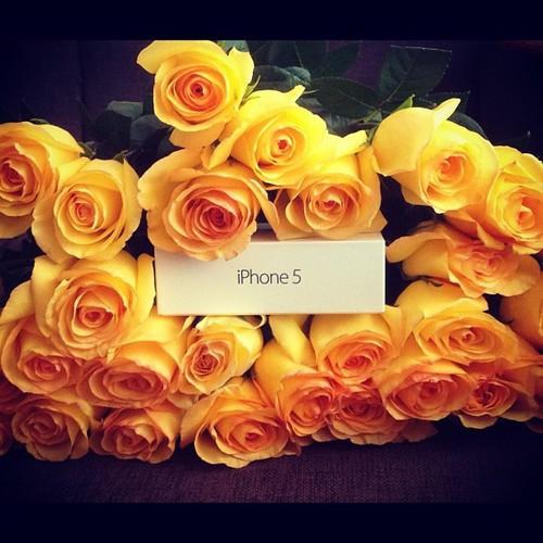 цветы розы айфон подарки фото изделия