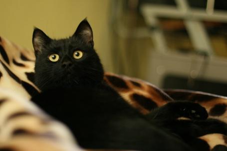 Фото Кот лежит на пледе