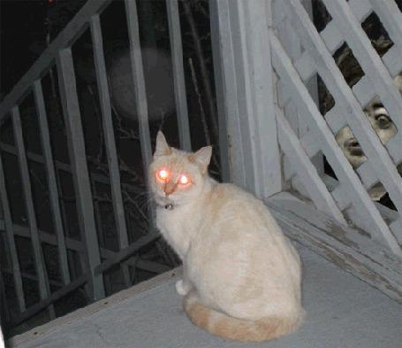 Фото Кот с сумасшедшими, гипнотическими глазами сидит на лестничной площадке, за решеткой видно чье -то лицо