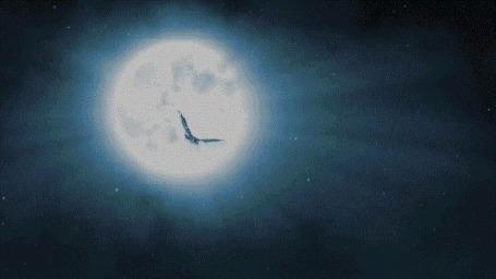 Фото Летящая в небе сова