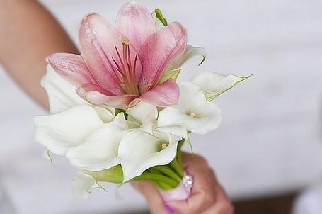 Фото Букет из белых и розовых цветов (© Black Tide), добавлено: 18.03.2013 13:45