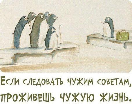 Фото Пингвин поучает других пингвинов (Если следовать чужим советам, проживешь чужую жизнь) (© Флориссия), добавлено: 20.03.2013 18:03