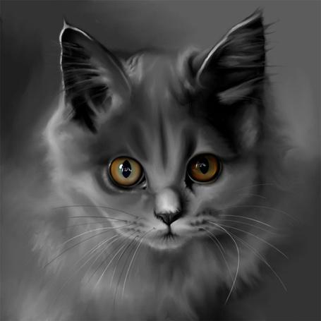 Фото Серый кот (© Lady-Hawke), добавлено: 20.03.2013 23:55