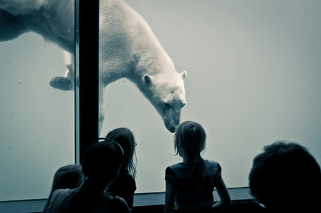 Фото Дети смотрят на полярного медведя за стеклом зоопарка