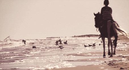 Фото Девушка на лошади скачет вдоль морского берега, пугающиеся птицы разлетаются по сторонам
