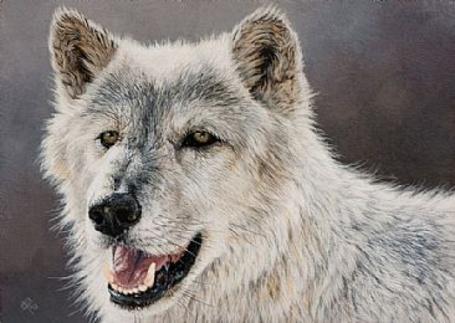 Фото Белый волк, рисунки животных Кристины Пенеску / Cristina Penescu (© Anatol), добавлено: 23.03.2013 02:56