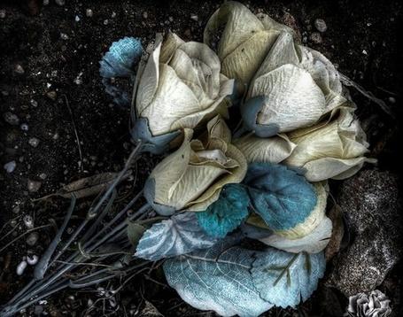 Фото Букет необычных роз на лежит земле (© ), добавлено: 23.03.2013 10:13