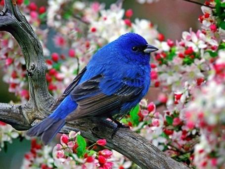 Фото Голубая птица сидит на ветке цветущего дерева