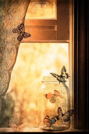 Фото Банка с бабочками стоит на окне, бабочка на занавеске, на подоконнике, на банке