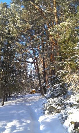 Фото Зимний день в лесу (© ZOLALA), добавлено: 24.03.2013 12:04